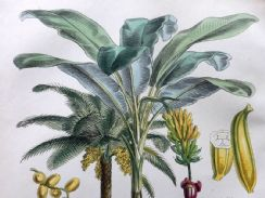 12th July 2019. William Rhind Botanical Prints